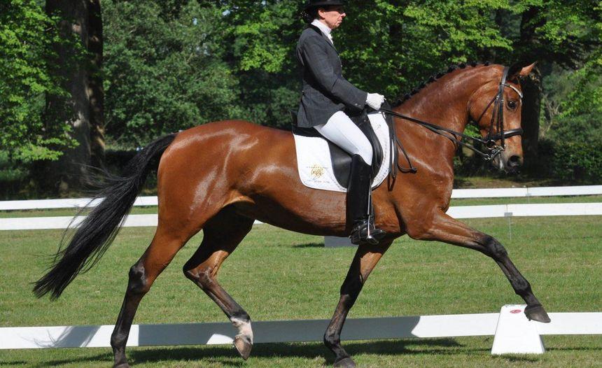 Export van Vlaamse sportpaarden naar het buitenland