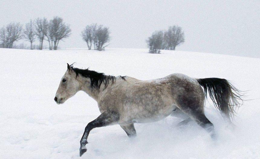 Paarden op de weide: Tip voor de winterperiode